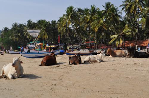 La plage de palolem