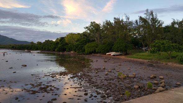 Les mangroves se battent pour survivre aux vagues